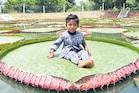 Giant Water Lilies: ఇంతింతై.. కొలనంతై.. జెయింట్ వాటర్ లిల్లీ ప్రత్యేకతలు ఎన్నో..